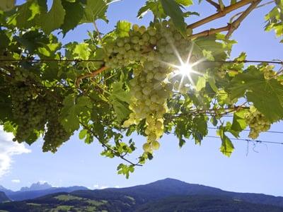 Alte Burg und neuer Wein: Biobauernhof-Besichtigung