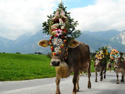 Wenn das Vieh von der Alm heimkehrt