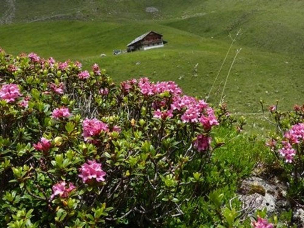 Wohlfühlurlaub im Frühling