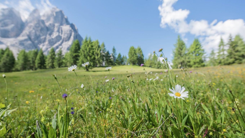 Settimana della fioritura con vette bianche