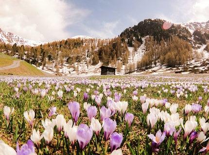 Risveglio della Primavera