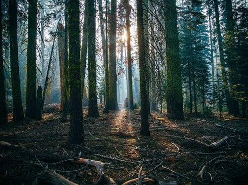 Durchatmen und Waldbaden. 5 Nächte
