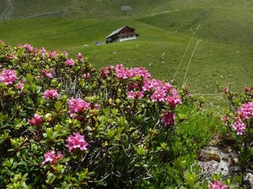 Spring holiday in the Gsieser valley