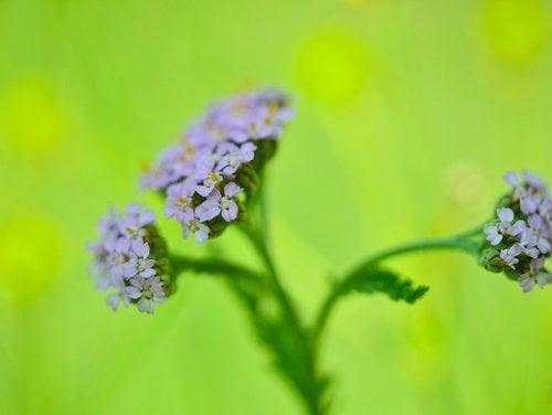 Le erbe selvatiche - tesori della natura