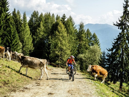 """4 days Mountainbike Package """"Double Trip"""""""